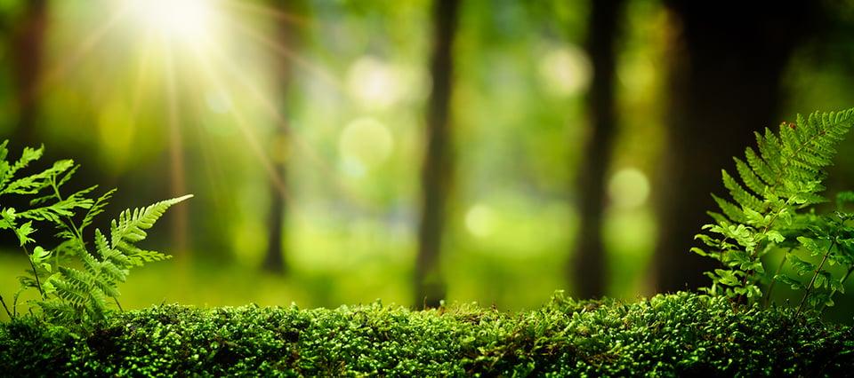 Clear Channel on sitoutunut vihreämpiin valintoihin toiminnassaan